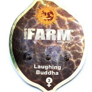 Laughing Buddha Feminised купить в Украине