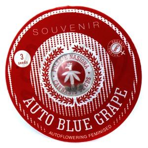 Auto Blue Grape Feminised купить в Украине